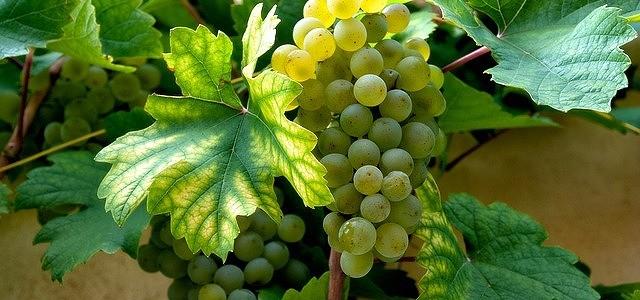 @wine-63931_640